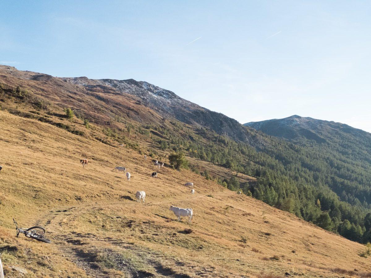 Sauze d'Oulx Mont Blegier