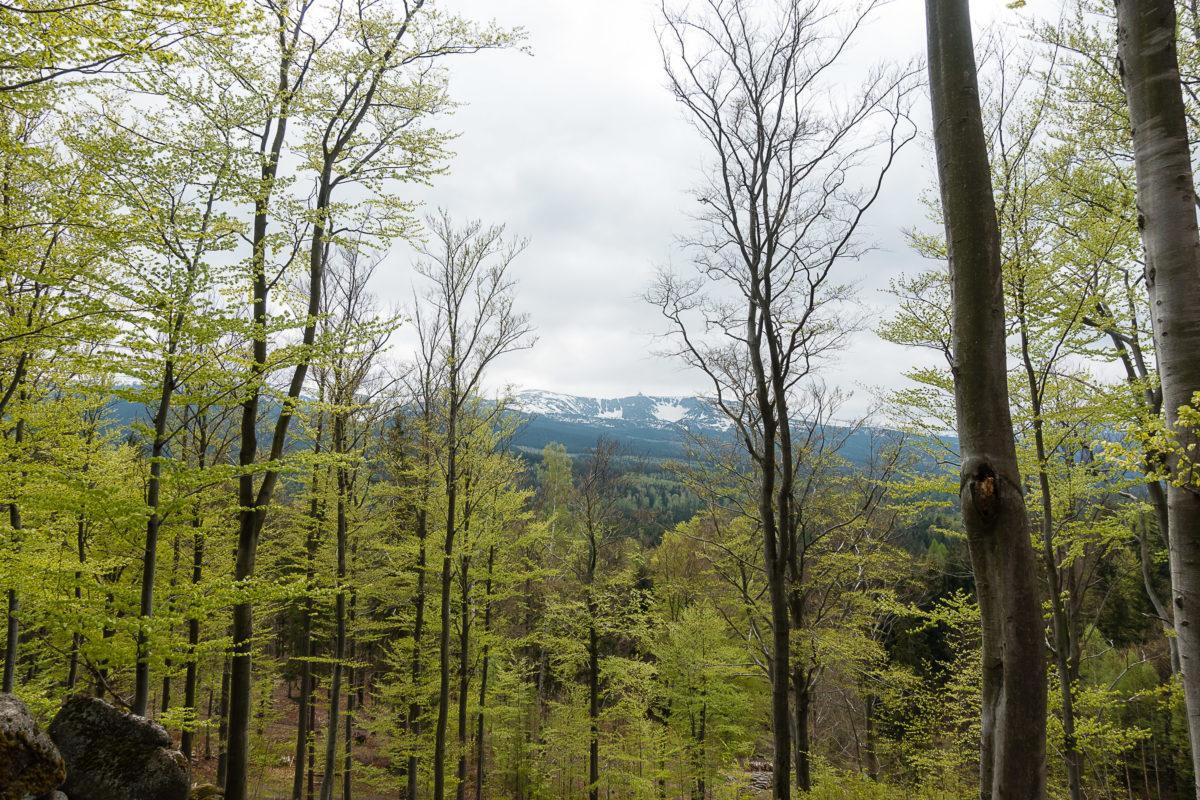 Aussicht aufs Riesengebirge